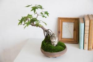 仏像盆栽4