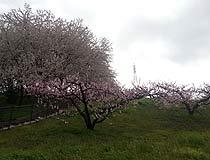 2014040402.jpg